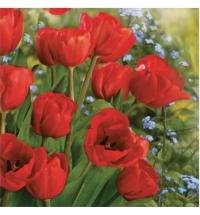 Салфетки сервировочные Pol-Mak Daisy Весенние тюльпаны 33х33см, 3 слоя, 20шт